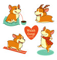 set of welsh corgi character in vector image vector image