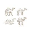 camel animal design vector image vector image