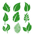 collection leaves green icons vector image