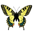 Colorful machaon butterfly vector image