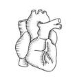 Human heart vintage vector image