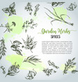 herbs and spices background herb plant spice vector image vector image