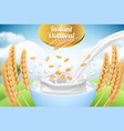 oatmeal ad placard template with milk and wheat vector image vector image