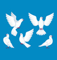 set five white doves beautiful pigeons faith vector image