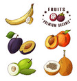 hand drawn of banana plum peach vector image vector image