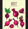 digital detailed line art color beet vector image