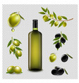 big set with branch olives and with virgin olive vector image vector image