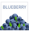 fresh blueberry concept background cartoon style vector image