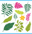 set tropical leaves isolated on white vector image vector image
