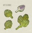 artichoke set hand drawn botanical isolated and vector image