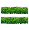 green fence from boxwood shrubs ornamental plant vector image vector image