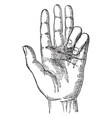 hand and number of fingers vintage engraving vector image vector image