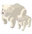 3d design for polar bears vector image vector image