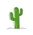cactus in desert hand-drawn cartoon style vector image