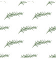 pattern with rosemary vector image vector image