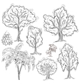 Set of isolated sketched trees vector image