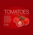 three ripe red tomatoes on a branch vector image