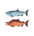fish salmon vector image vector image
