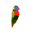little colorful bird cute parrot budgie home pet vector image vector image