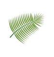Coconut Leaf Icon vector image vector image