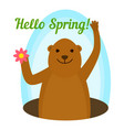 groundhog hello spring icon flat style vector image