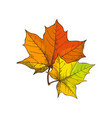 maple leaves symbolic isolated icons set vector image vector image