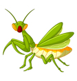 Praying mantis grasshopper cartoon vector image vector image