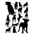rottweiler dog animal silhouette vector image vector image