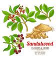 sandalwood set vector image vector image