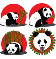 set of images of panda - a bamboo bear vector image