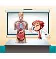 Scientist and human anatomy model vector image