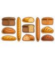 set assorted bread vector image