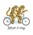 tigers ride a tandem bike vector image