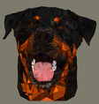 triangulation of the rottweiler dogs face vector image