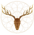 sketch of deer skull for tattoo printing on vector image