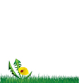 Ladybird on Dandelion in the grass background vector image