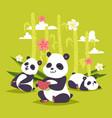 panda bearcat chinese bear with bamboo vector image vector image