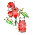 sketch of tomato for design vector image vector image