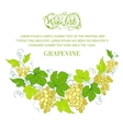 Wine list design with grapes decoration vector image vector image