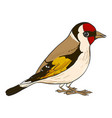 drawing goldfinch vector image vector image