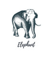 elephant hand drawing vector image vector image