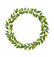 green olive wreath isolated white background vector image vector image