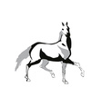 Horse drowing vector image