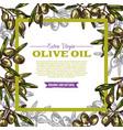 olive oil label with green fruit and leaf frame vector image vector image