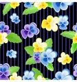Pansies on strips black background vector image