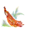 Peacock On White Background Tropical plants vector image