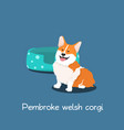pembroke welsh corgi pet cartoon with dog bowl vector image