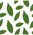 seamless pattern with diffenbachia plants green vector image