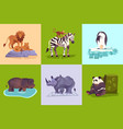 zoo animals concept set vector image