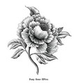 antique engraving peony flower drawing vintage vector image vector image